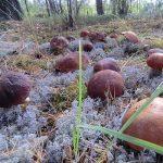 Почему все съедобные грибы можно выращивать на плантациях?