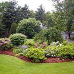 Лучшие декоративные деревья и кустарники для сада
