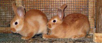 Кожные недуги у кроликов: виды и профилактика