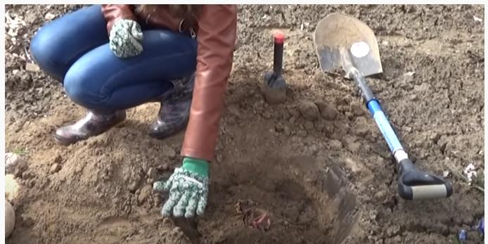 Как правильно посадить пионы в открытый грунт