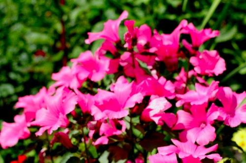 Как правильно выбирать букет цветов? Цветы возле м. Текстильщики