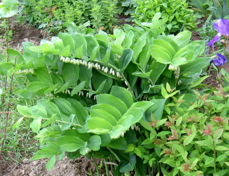 Многолетние садовые цветы для дачи – фото, названия, описания