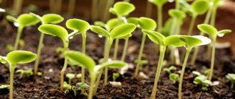 Полезные насекомые и стимуляторы роста растений — к вашим услугам